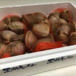 BBQの魚介は通販がおすすめ!黒潮キッチのホンビノス貝をレビュー